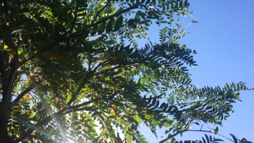 Sonnenlicht fällt durch Blätter eines Baumes