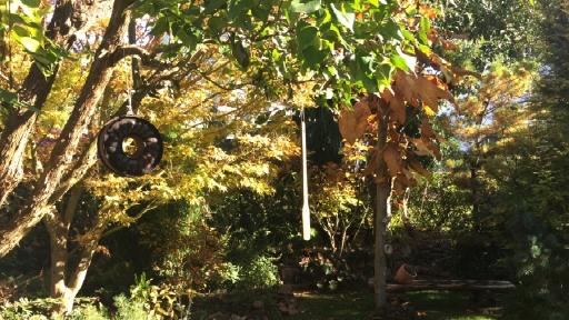 Ein Garten mit Bäumen