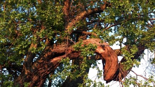 Bizarrer Ast eines Baume