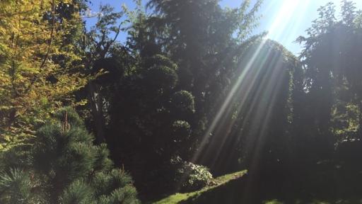 Sonne strahlt zwischen Bäumen hindurch.