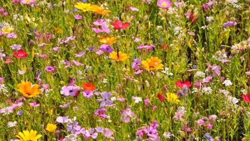 Eine Wiese voller blühender Blumen.
