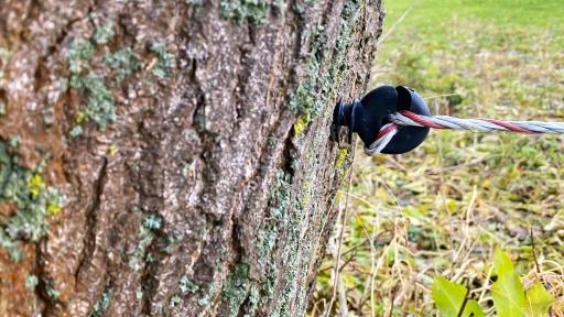 Ein Baum als Pfosten für einen Weidezaun. Am Baum ein Isolator mit einer Litze.