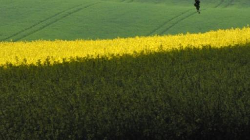 Felder mit verschiedenen Farben.