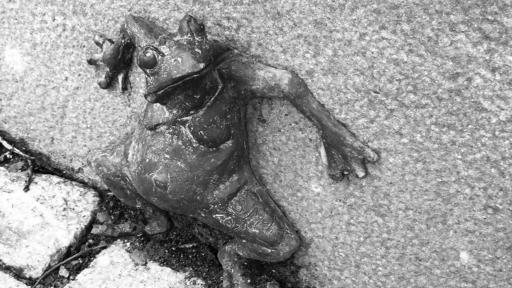 Bronzebildwerk: ein ängstlich blickender Frosch