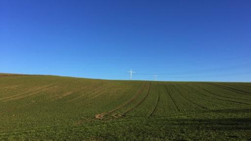 Eine Wiese. Im Hintergrund zwei Strommasten