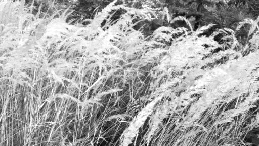 Gräser im Vordergrund. Im Hintergrund Wald