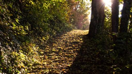 Ein Weg aufwärts führender im Wald, Die Bäume im Herbstlaub, zwischen den Bäumen ist die Sonne zu sehen.