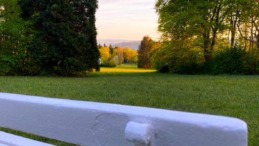 Im Vordergrund eine Parkbank, im Hintergrund eine Bäume in der Abendsonne.