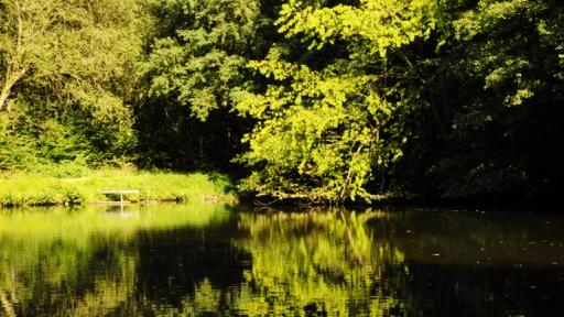 Ein Teich mitten mit Wald