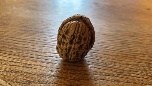 Eine Wallnuss auf einem Eichenbrett.