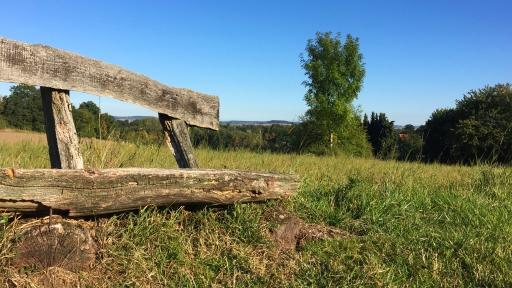 Eine verwitterte Holzbank auf einer Wiese.