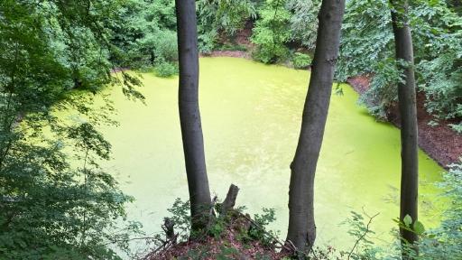Ein von Algen grüner Teich in einem Wald, ein Erdfall.