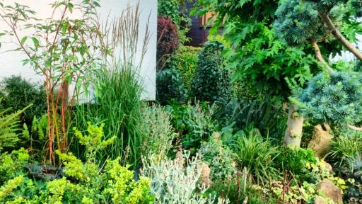 Viele verschiedene Pflanzen vor einer Hausecke