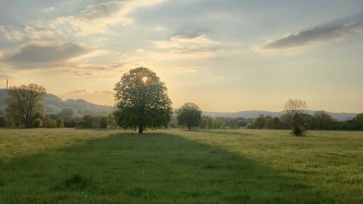 Die untergehende Sonnen scheint zwischen den Ästen und Zweigen eines mächtigen Baumes hindurch. Links und rechts Wiesen mit weiteren Bäumen.