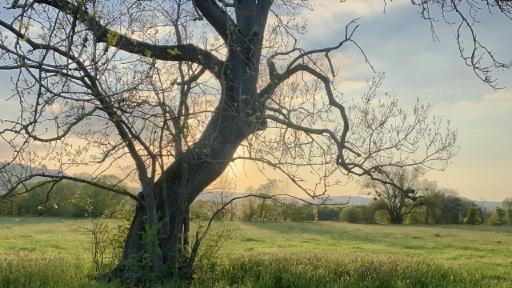 Der krumme Stamm eines Baumes dient als Sonnenblende. Links und rechts Wiesen mit weiteren Bäumen.