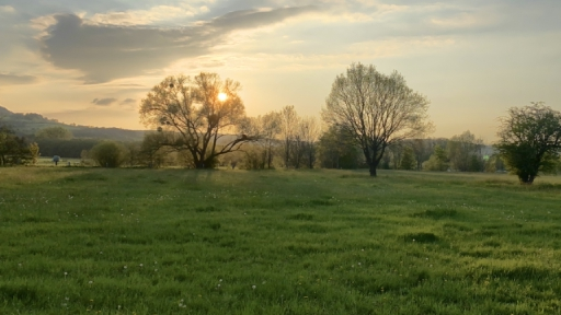 Die untergehende Sonnen scheint zwischen den Ästen und Zweigen eines Baumes hindurch. Links und rechts Wiesen mit weiteren Bäumen.