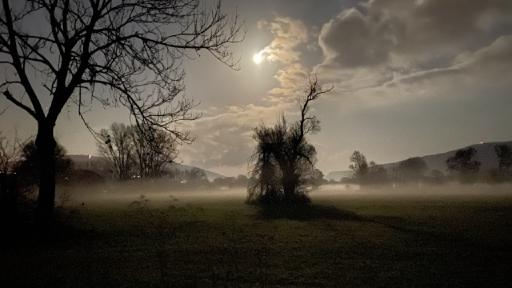 Wiesen und Bäume im Nebel, erhellt durch das Licht von einem Vollmond.