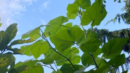 Das Blattwerk von verschiedenen Laubbäumen. Im Hintergrund ein paar Wolken und vor hellblauem Himmel.