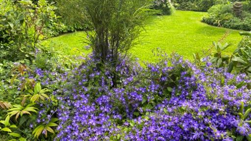 Ein Garten mit vielen Pflanzen und Blüten.