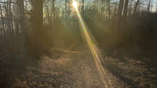 Das Licht der Abendsonne blendet. Nur sehr schlecht ist der Weg der durch den Wald herunter führt zu sehen.