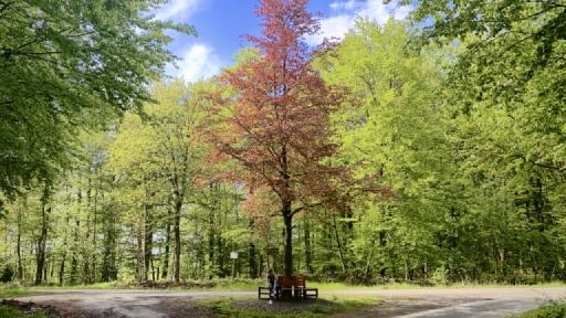 Ein Wegekreuz im Wald.