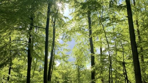 Hellgrünes Laub auf den Bäumen, dazwischen sind dunkle Wolken zu sehen.