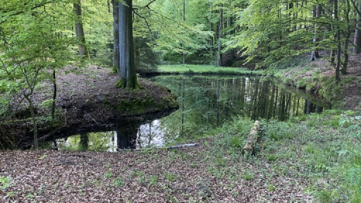 Ein Teich im Wald.
