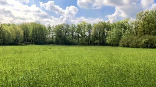 Im Vordergrund eine Wiese. im Hintergrund Bäume, darüber Quellwolken.