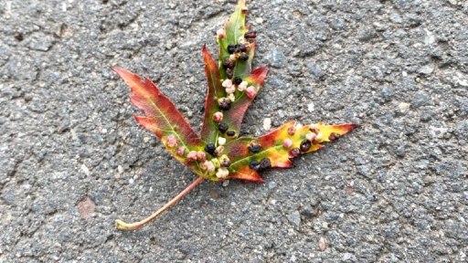 Ein herbstlich gefärbtes Blatt liegt auf dem Asphalt einer Straße