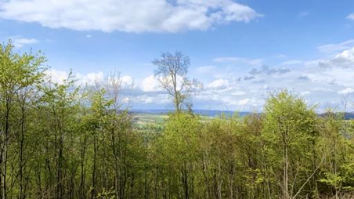 Blick über Bäume hinweg. Im Hintergrund Felder