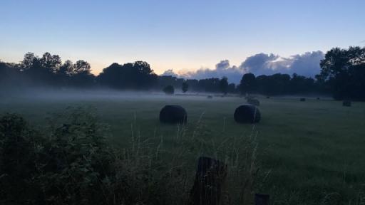 Dämmerung. Im Hintergrund Bäume, im Vordergrund Wiesen worauf Nebelschleier liegen.