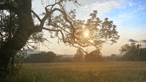 Der Ast eines alten Baumes im Licht von einem Sonnenuntergang.