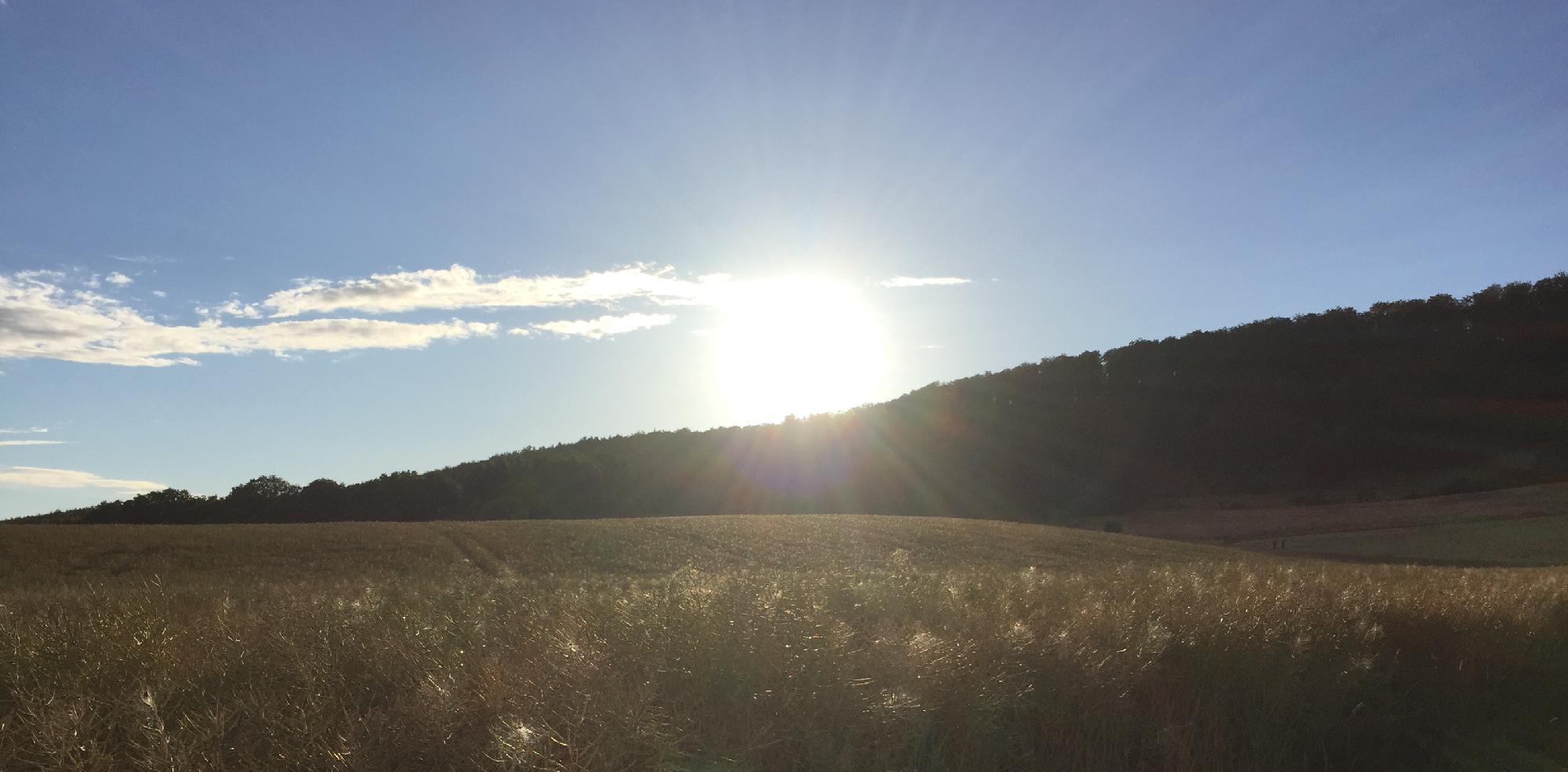 Sonnenuntergang über ein Rapsfeld