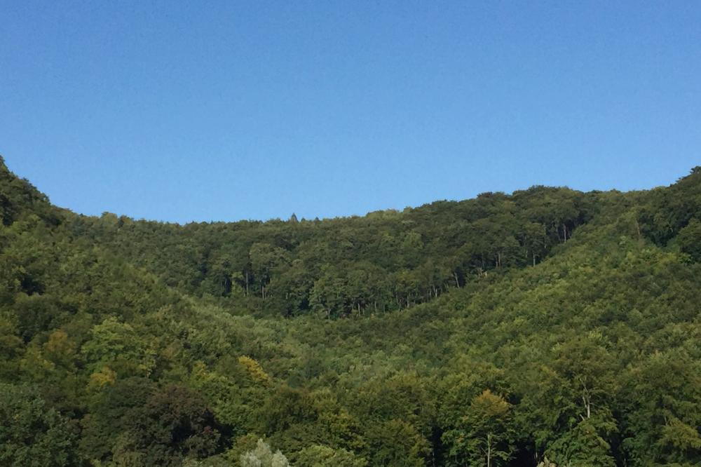 Bewaldete Berge