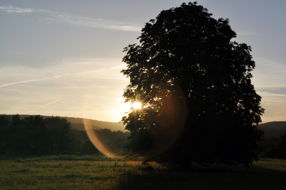 Ein Baum in den Emmerwiesen von Lügde
