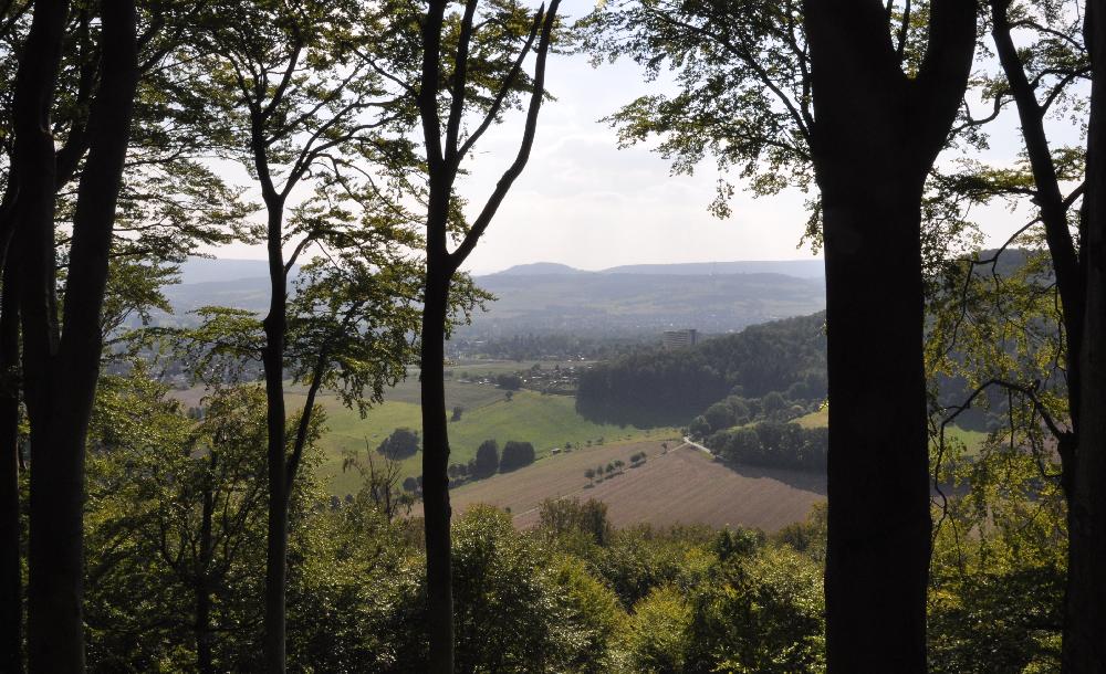 Blick aus einem Wald in ein Talkessel