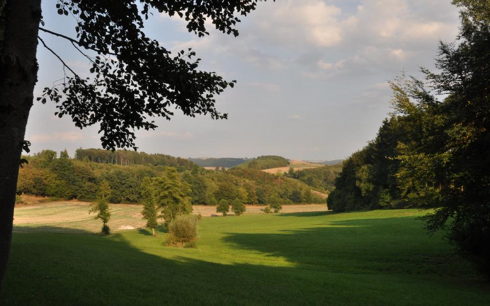 Blick aus dem Wald hinaus in ein Tal mit Feldern und Wiesen
