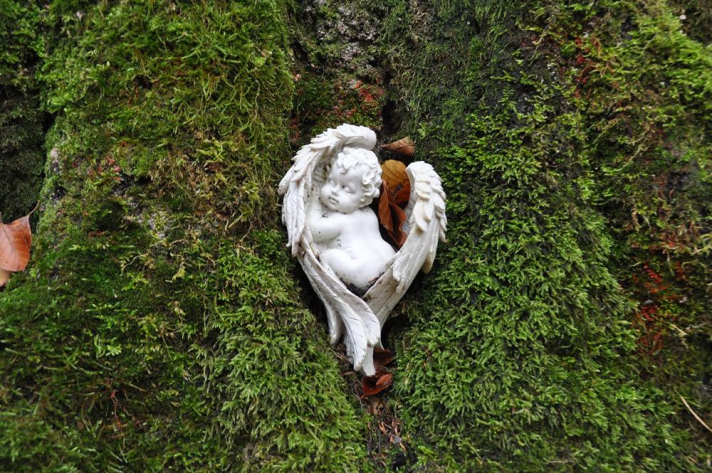 Ein Plastik in Form eines Engels im Moos eines Baumstammes