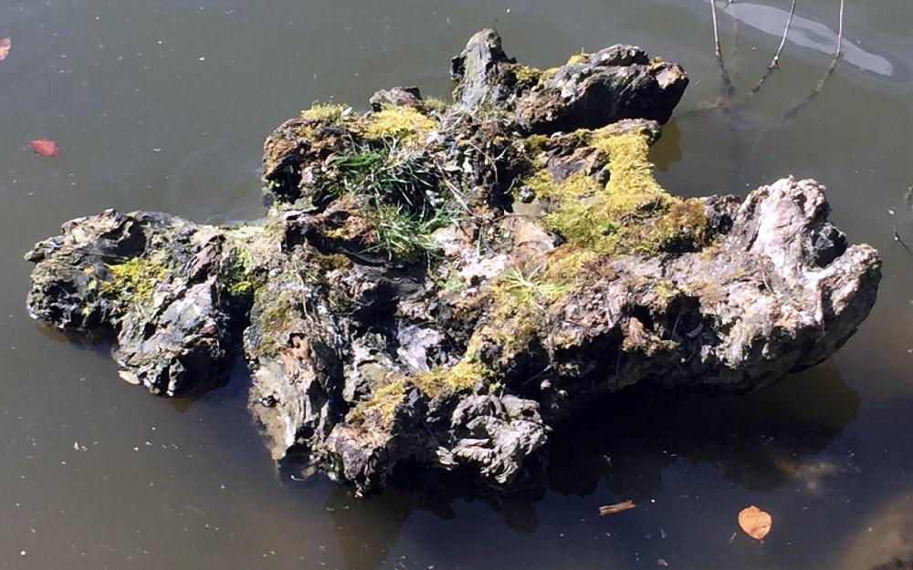 Ein Stück Baum, Treibgut, in einem See