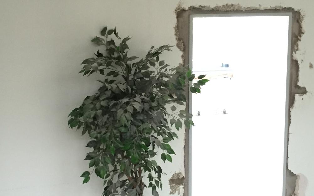 Staubpflanze