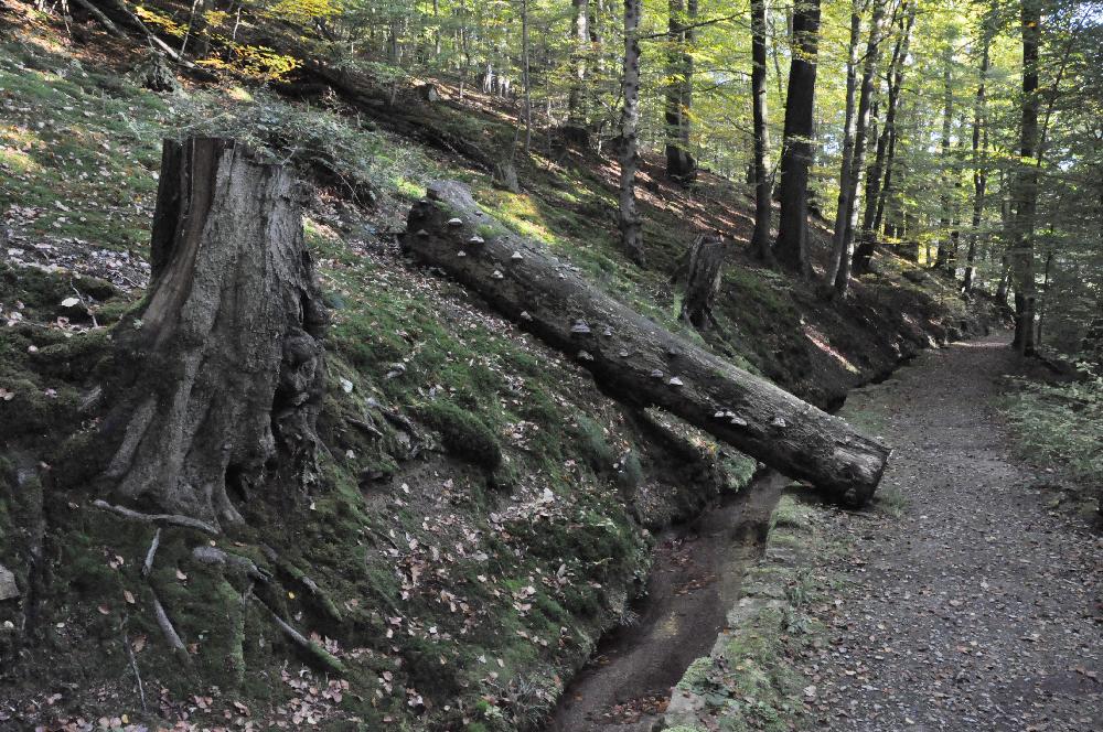 Schwalenberg: Ein Bach fließt entlang eines Weges.