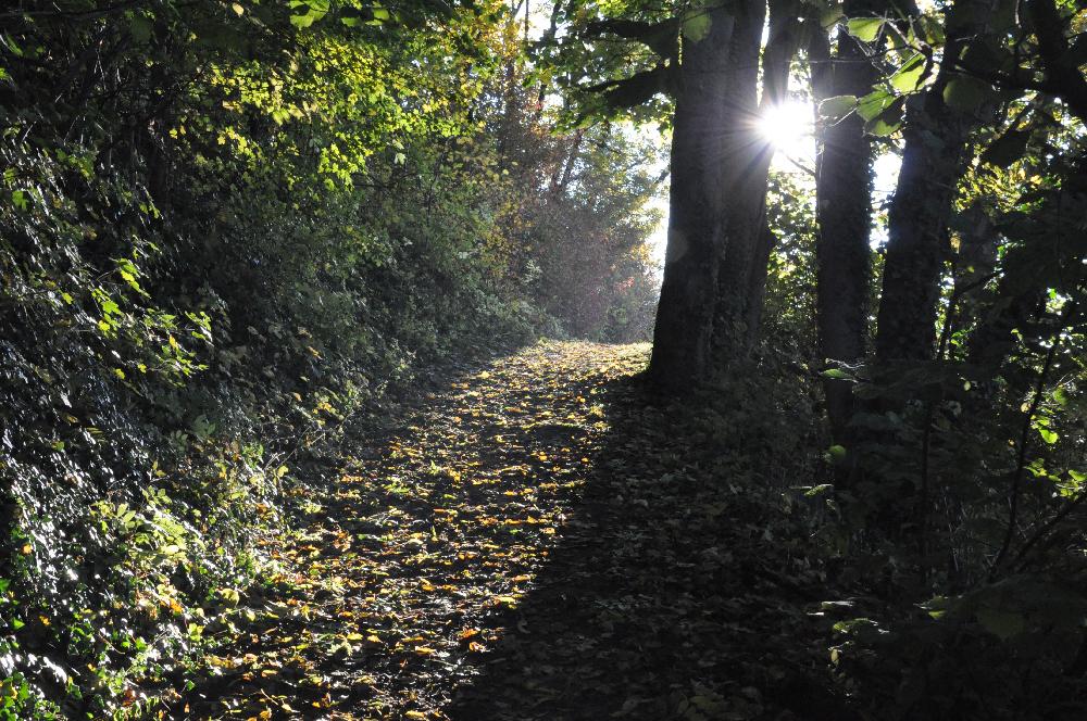 Ein Weg voller Laub