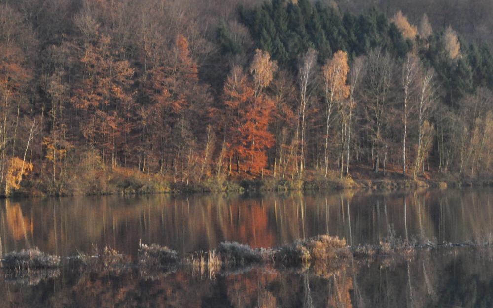 Bäume spiegeln sich in einem See
