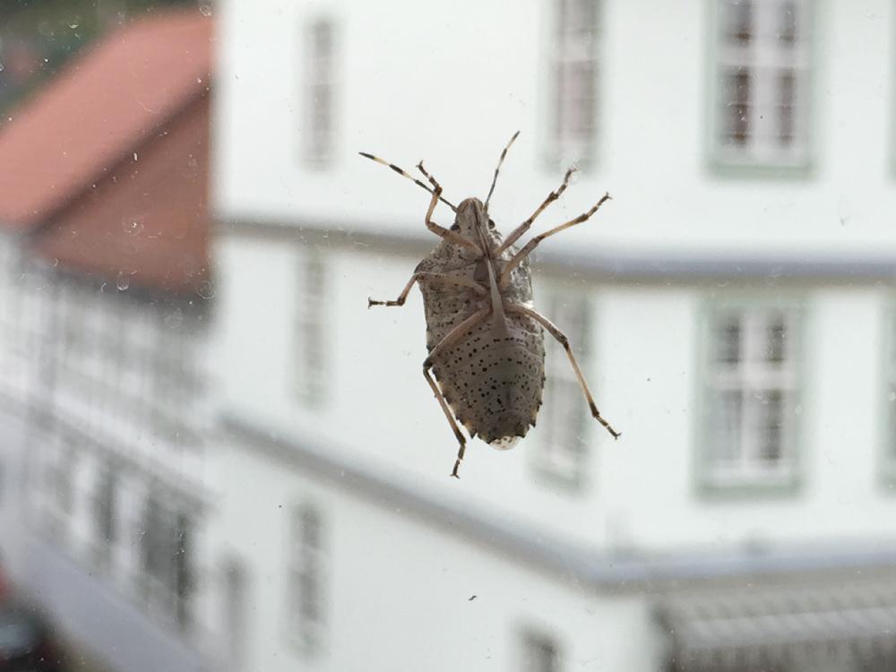 Ein Insekt vor einem Fenster
