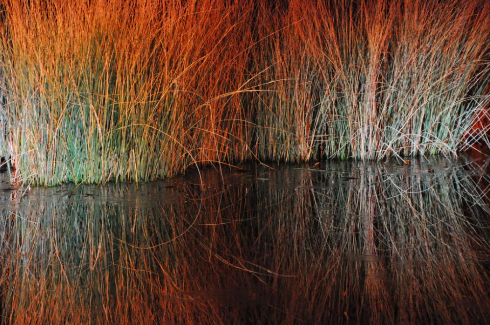 Gras welches sich im Wasser spiegelt