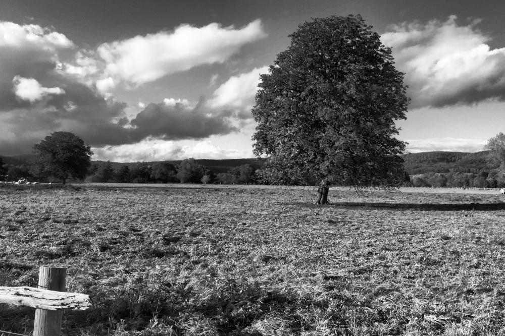 Ein Baum auf einer Wiese
