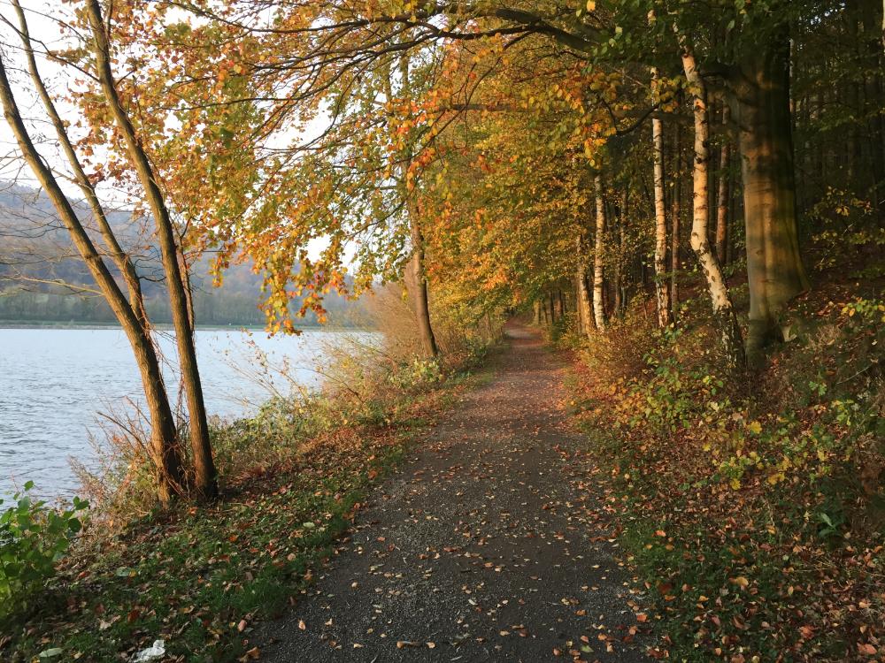 Ein Weg entlang eines Sees, die Bäume am See mit herbstbunten Laub
