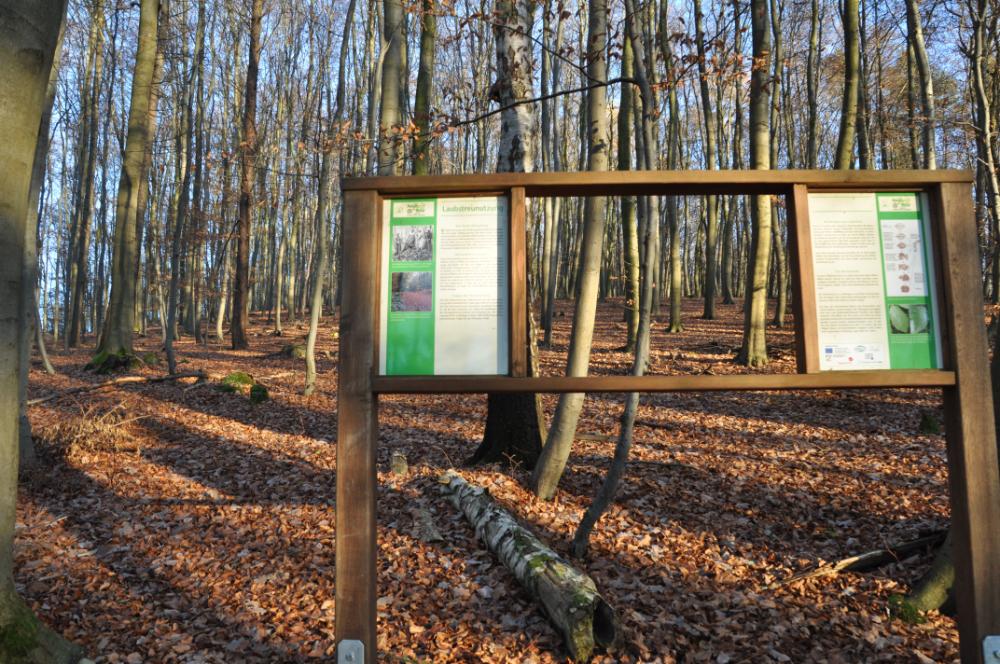 Infotafel im Wald zum Laubstreu