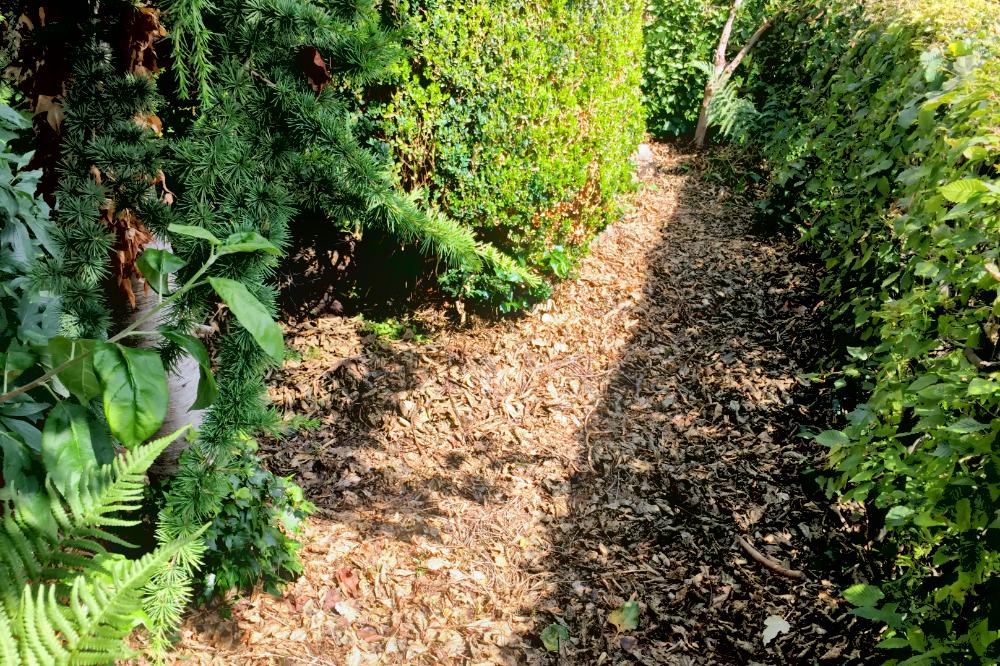 Eine Hecke, ein schmaler Weg und ein Pflanzenbeet