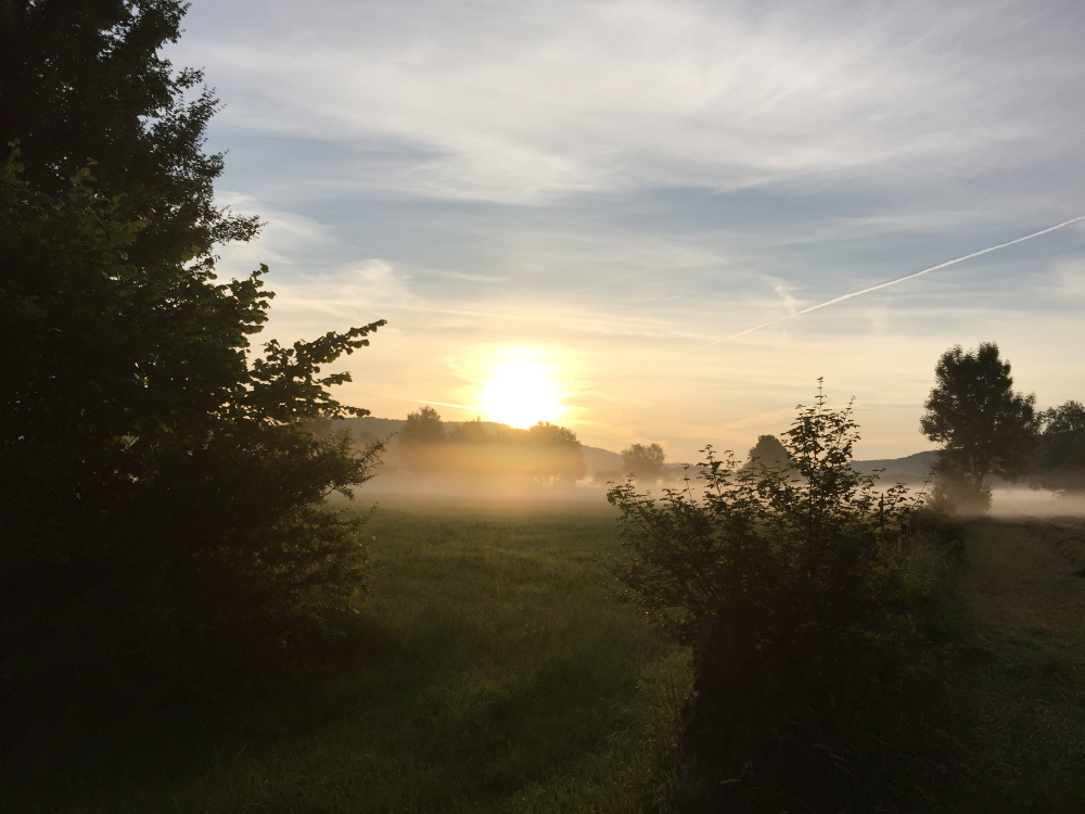 Nebelschleier in zwischen Bäumen und über Wiesen